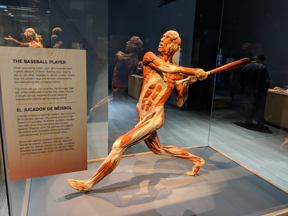 SaaStr Nights party at San Jose Tech Museum featuring Body Worlds exhibit